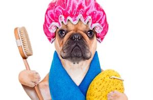 Baño, cepillado y/o corte para perros