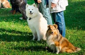 Curso intensivo de adiestrador canino