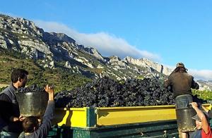 Disfruta de una experiencia entre viñedos