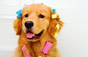 Sesión de peluquería canina y más
